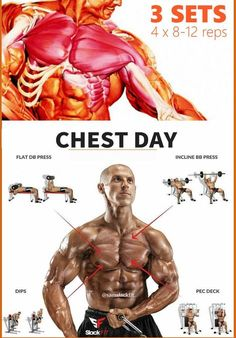 "The Ultimate Chest Workout: Chest Exercises for Awesome Pecs. If you want big, full, strong, ""armor-plate"" pecs that pop, then you want to do these chest exercises and workouts. Your chest is made of 3 sub-groups: your upper, middle, and lower pecs, all of which need to be stimulated to get the most out of your workouts and sculpt three-dimensional muscle."