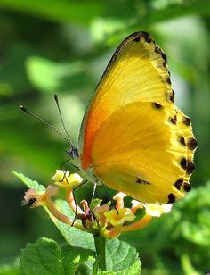 seasonalwonderment: Insectes