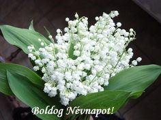 White Lily Of The Valley Wedding Bouquet May Birth Flowers, May Flowers, Beautiful Flowers, White Flowers, Lilies Flowers, Simply Beautiful, Ikebana, Bulbous Plants, 1. Mai