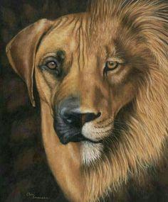 Der Rhodesian Ridgeback ist eine von der FCI anerkannte Hunderasse aus Südafrika und Simbabwe. Die Rasse wird in vielen Teilen der Welt zur Jagd von Wild verwendet, aber auch als Wachhund und Familienhund gehalten.  Lebenserwartung:10 bis 12 Jahre  Temperament: Intelligent, Loyal, Spitzbübisch, Würdevoll, Durchsetzungsstark, Empfindlich
