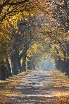 Free stock photo of trees, park, leaves, autumn