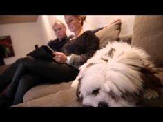 Film, Videos, Dogs, Animals, Fireplace Heater, Fan, Smoking, Movie, Animales