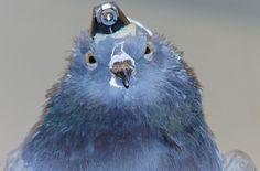 A ciência sabe pouco sobre como os pássaros se orientam em espaços desordenados como florestas e grandes cidades cheias de prédios. Mas