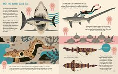 Smart About Sharks: a great new children's book from illustrator Owen Davey – Creative Review
