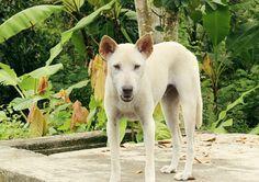 7/14(水)バリ島ウブドのお天気は晴れ。室内温度27.7℃、湿度79%。バリの犬ってなんて情けない表情の子が多いのでしょう(笑)可愛い洋犬も良いけど、バリ犬の方がスキ