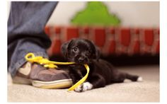 Aww, don't bite my shoelace. That doesn't go in your mouth