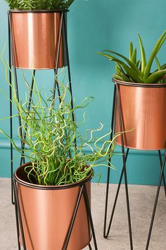Set of Three Copper Plant Stands Large approx 60cm x 22cm x 18cm Medium approx 45cm x 20cm x 18cm Small approx 28cm x 18cm x 18cm The copper pots are all the same size approx 16cm x 16cm x 15cm Made from metal Copper plant pots with black metal wire stands Comes as a set of three stands as shown Any accessories show in the pics are for display purposes only and not part of the sale Brand new and in box