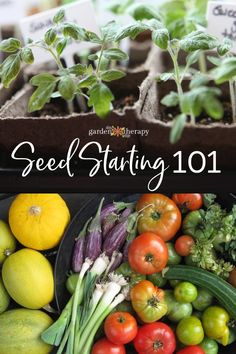 Seed Starting 101 - Starting a garden off right with healthy seeds sets the root., garden vegetable seed starting Seed Starting 101 - Starting a garden off right with healthy seeds sets the root. Diy Gardening, Gardening For Beginners, Organic Gardening, Balcony Gardening, Gardening Shoes, Allotment Gardening, Organic Compost, Florida Gardening, Flower Gardening