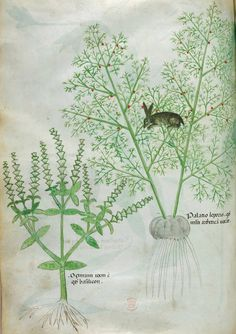 Herbal, Italy, N. (Lombardy); c. 1440