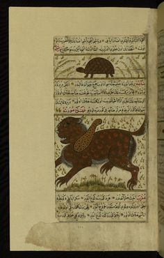 A turtle and a strange animal called ḍājah Wonders of Creation by Qazwīnī 1293 was translated to Turkish in 1717  completed by Rūzmah-ʾi Nāthānī - W659