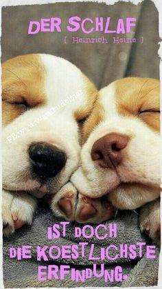 """""""Der Schlaf ist doch die köstlichste Erfindung."""" (Heinrich Heine ; 1797 - 1856)"""