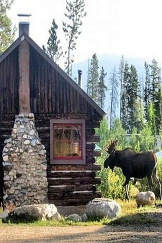 Rustic Cabin Living with a moose!