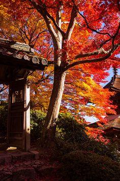 Yoshiminedera #japan #kyoto