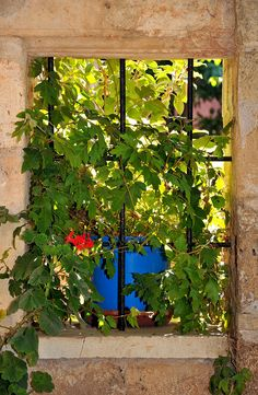 Vineleaf  Window in Hania, Crete
