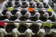 Starting seedlings - egg carton
