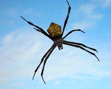 Creepy-crawlies like this guy are a common #phobia.