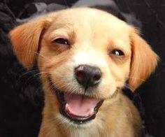 smile puppy