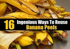 Don't throw your banana peels away! Here are 16 ingenious ways to reuse them, from getting rid of warts, whitening teeth and shining silver. and some goats and horses like to eat them! Aloe Vera, Banana Peel Uses, Banana Peel Teeth, Dried Bananas, Yellow Fruit, Compost Tea, Fertilizer For Plants, Thing 1, Peeling