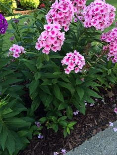 Free Plant Identification With Images Garden Shrubs Container
