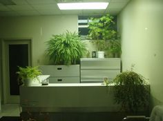 office plants, feng shui, plant therapy, pot plants, university of michigan, attention restoration, desk plants