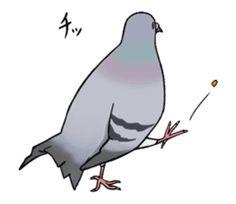 Cute Pigeon by Studio Pigeon Cute Pigeon, Line Sticker, Cute Photos, Bird Art, Art Projects, Cute Animals, Sketches, Birds, Stickers