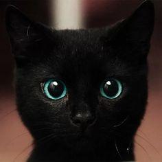 Stunning eyes. - Imgur
