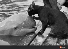 Crazy Cat Lady, Crazy Cats, I Love Cats, Cute Cats, Weird Cats, Pretty Cats, Especie Animal, Amor Animal, Animal Hugs