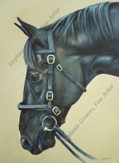 Dick Turpin, Stallion portrait. By Equine Artist Stephanie Greaves horse, painting, portrait, acrylics http://stephaniegreaves.co.uk