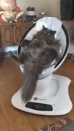 This thing really does work like magic Cette chose fonctionne vraiment comme par magie - Funny Animal Memes, Cute Funny Animals, Cute Baby Animals, Animals And Pets, Funny Cats, Beautiful Cats, Animals Beautiful, Cute Animal Videos, Cat Love