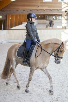 Dressage tack for your pony at Summerside Tack. Horse Riding Tips, Horse Riding Clothes, Horse Gear, Trail Riding, Cute Horses, Pretty Horses, Horse Love, Haflinger Horse, Andalusian Horse