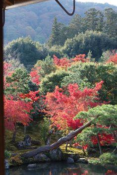 紅葉の天龍寺、奥庭そして、奥山   ジャンクエレガンス アンダーワールド♪ 池のほとりに動きを添える松の枝ぶり。