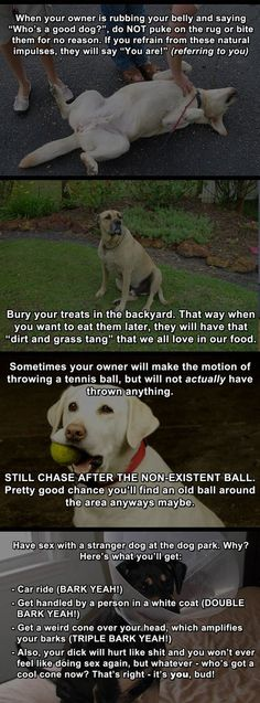 Hacks for dogs...
