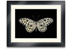 Lloyd Butterfly I