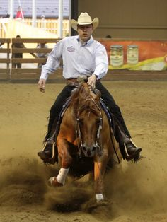 Chic N Roost(Gallo Del Cielo x Dun Maid By Chic)2002 Red Dun AQHA Stallion
