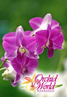 Orchid World Barbados