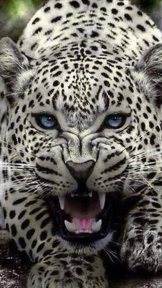 Kids hiking backpack, jaguar, man vs wild, animals beautiful, cool things to Big Animals, Majestic Animals, Rare Animals, Animals And Pets, Beautiful Cats, Animals Beautiful, Man Vs Wild, Gato Grande, Carnivore