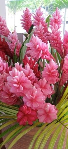 Hawaiian Ginger - pink flowers, so divine!