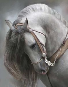 Andalusian beauty
