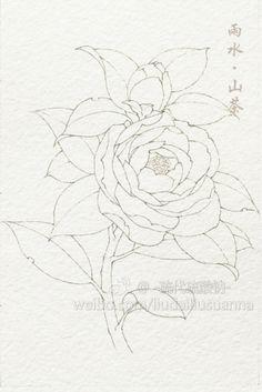 二十四节气花卉,线稿1-硫代硫酸钠_原创...