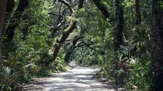 "NorthEast Florida / Wander through Florida's past to the Ft. George Island, northeast of Jacksonville, through thick, majestic oak trees leading to the Kingsley Plantation where slaves once toiled the land leaving behind their ""tabby"" homes."