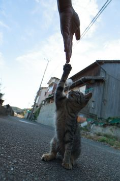 Fubirai.   Fukuoka, Japan:The cats aren't exactly tame, but they're not exactly wild either.