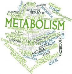 Metabolism - The Healthiest Strategy to Lose Weight - https://planetsupplement.com/metabolism-the-healthiest-strategy-to-lose-weight/