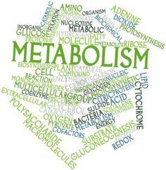 Recupere o seu metabolismo | Diário de uma Dietista