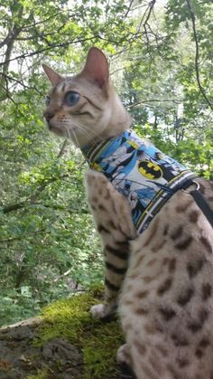 Butterfly Cat Jackets make walking your cat safe.