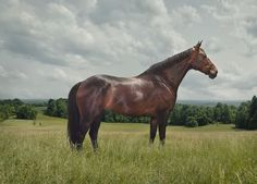 Holiday Gift Guide: Pony Portraits from the incredibly talented Leon Steele
