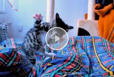 Sweet Jumpy Kitty :3