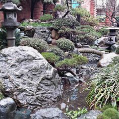 January rain brings...our Japanese gardens pond to life! The beautiful Japanese garden at our Culver City Julian Dixon Library benefited from the recent #LARain. #lacountylibrary #lacounty #library #japanesegarden #culvercity #librariesofinstagram