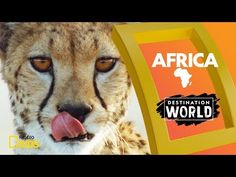 "Experience the hottest of the seven continents on this episode of ""Destination World."" Africa is home to some of the most famous animals in the world—here's . Largest Countries, Countries Of The World, Egypt Country, Argentina Country, Australia Country, Africa Destinations, Curious Kids, National Geographic Kids, World Geography"