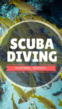 Planning a trip to Cozumel Mexico and you are interested in Scuba Diving? Read about our scuba diving experience in Cozumel, the best dive sites in Cozumel andmuch Cozumel Mexico, Mexico Resorts, Mexico Vacation, Mexico Travel, Cozumel Scuba Diving, Best Scuba Diving, Scuba Travel, Western Caribbean, Mexico Culture
