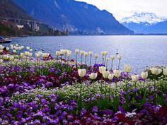 Flores de Suiza, Europe-Switzerland.